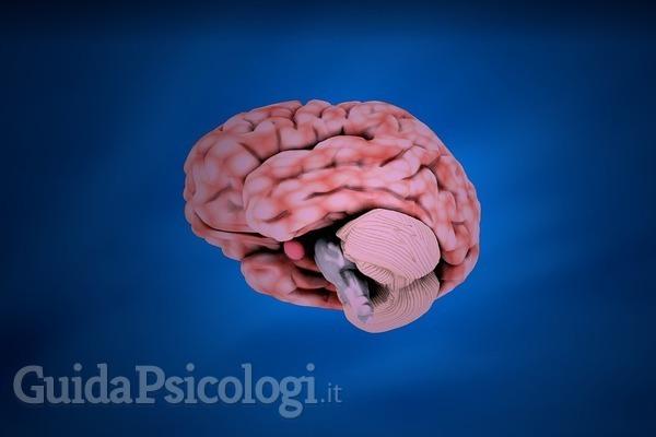 La relazione tra l'Adhd e il cervello