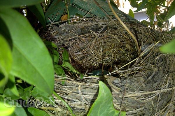 La sindrome del nido vuoto